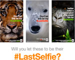 Is There a Role for Snapchat in Marketing Campaigns?