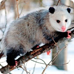 What Marketers Need to Know about Google's Possum Update